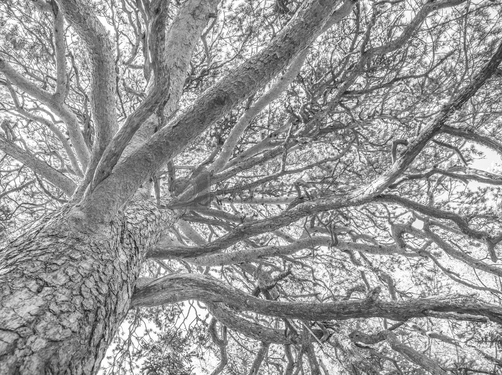branches of a tree against sky close up