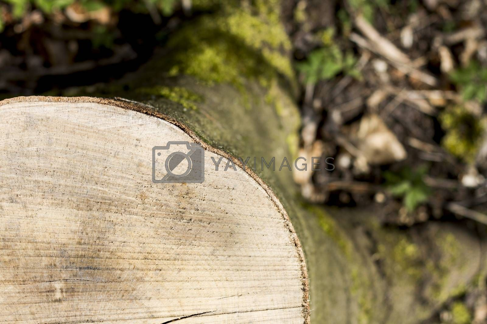 Royalty free image of stump taken from the top by gewoldi