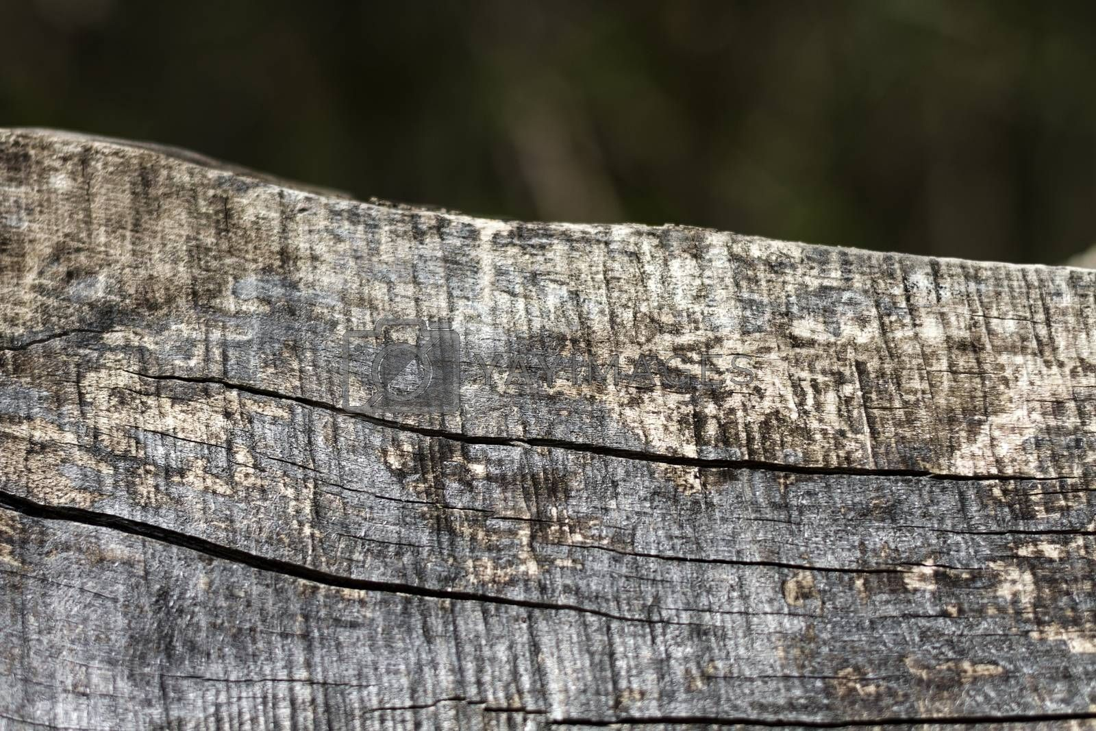 close up of old weathered piece of wood