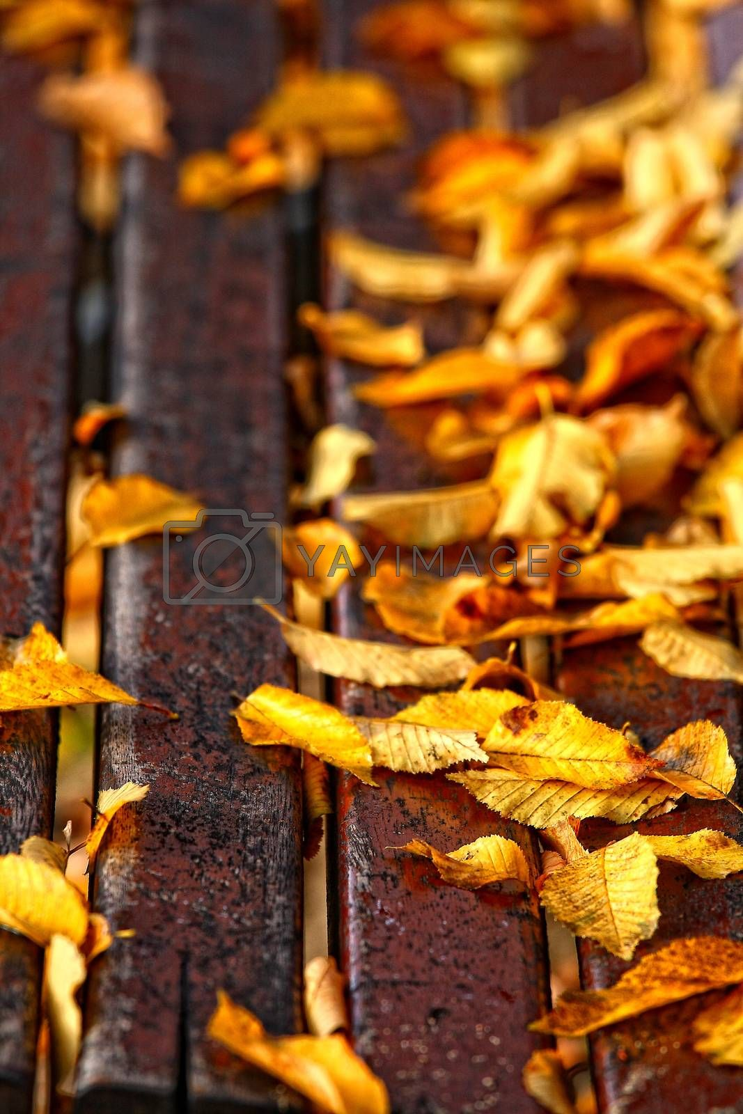 leaves over a bench in a park
