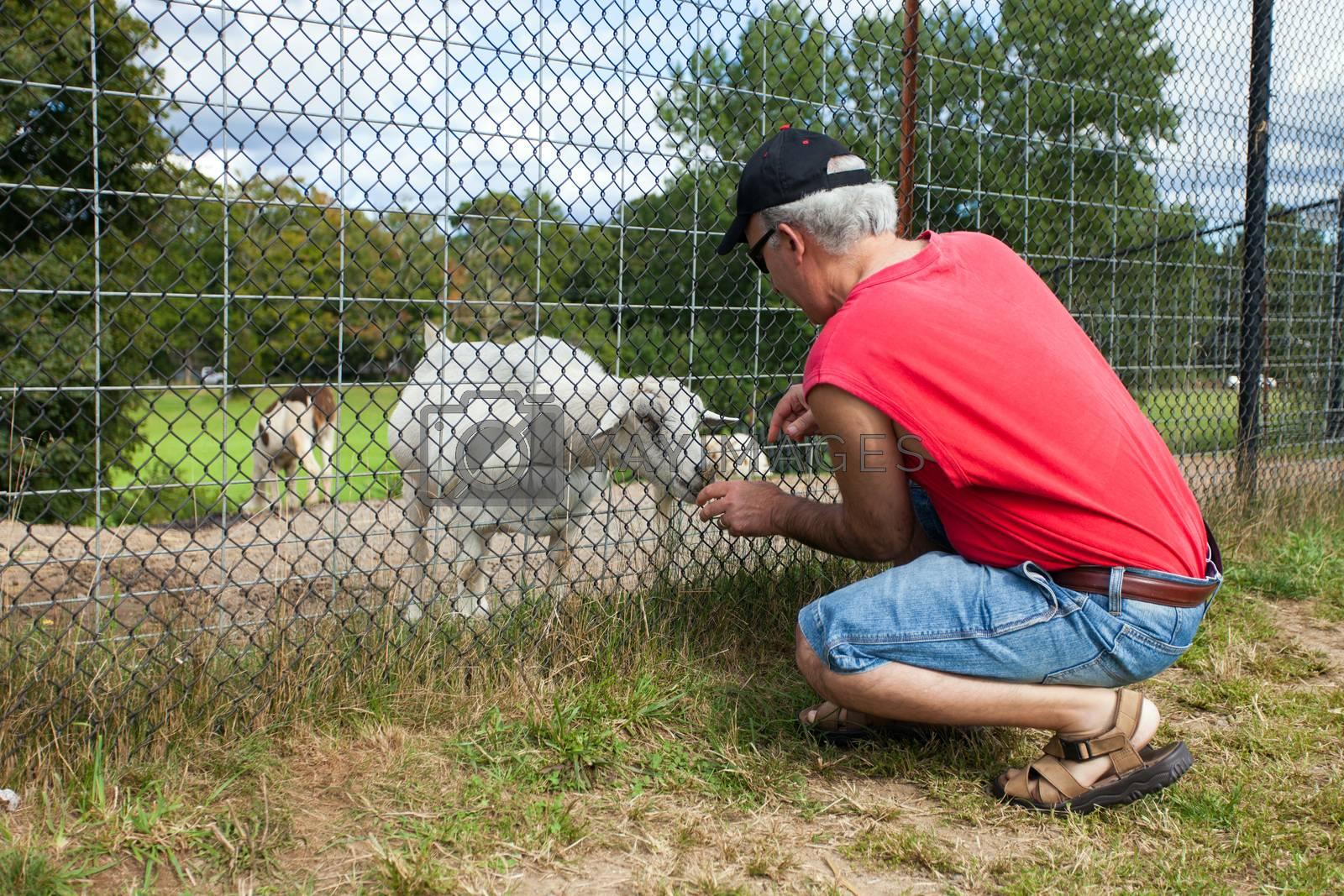 Man feeding a little goat through the fence.