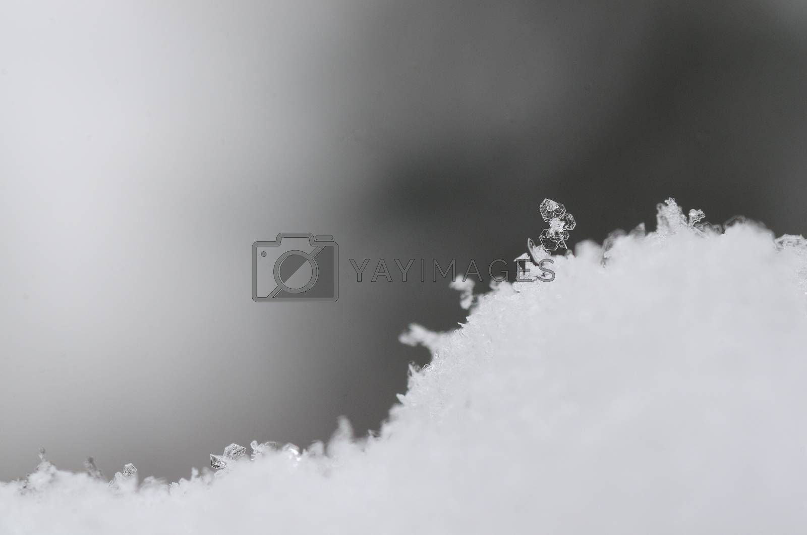 single snow crystal with gray background