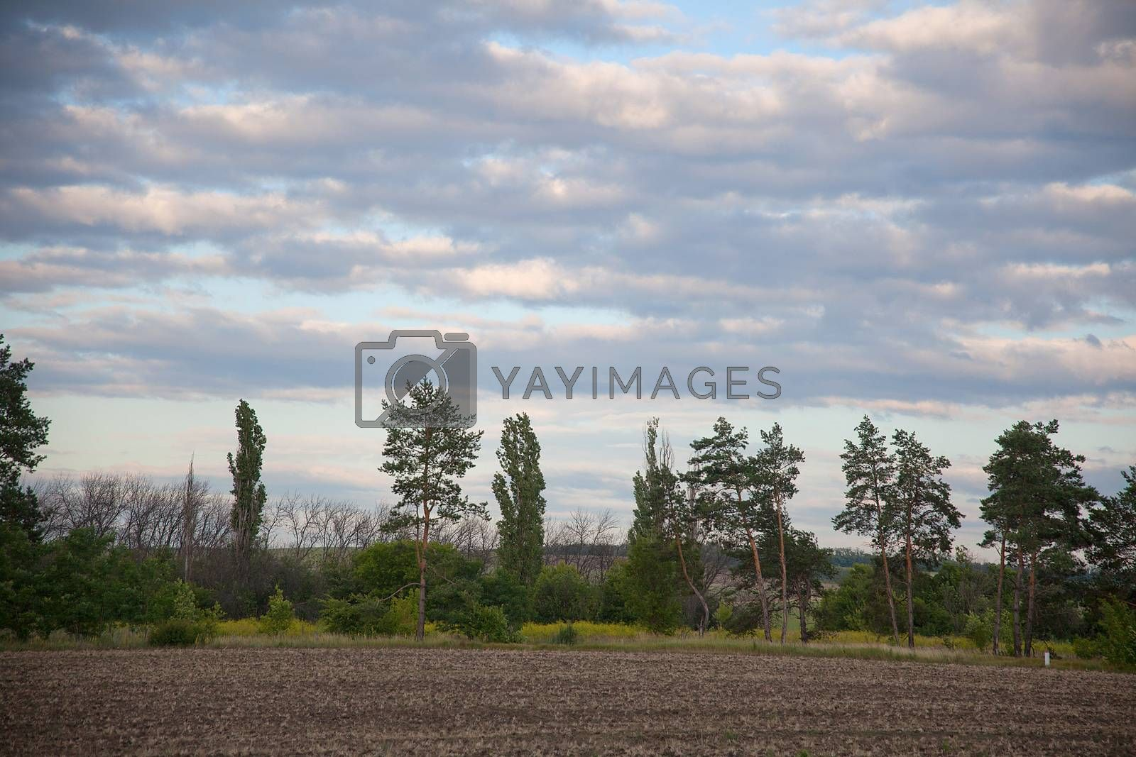 Summer landscape with tilled soil, trees and clouds