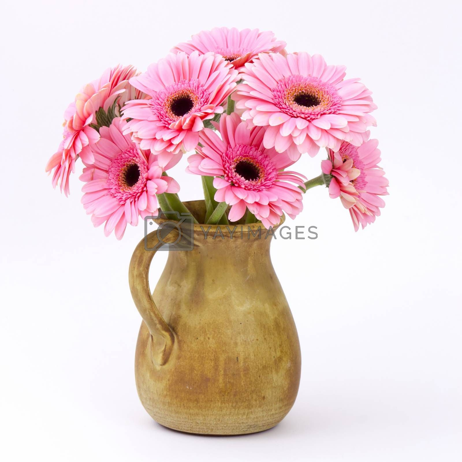 pink gerbera flowers in a vase