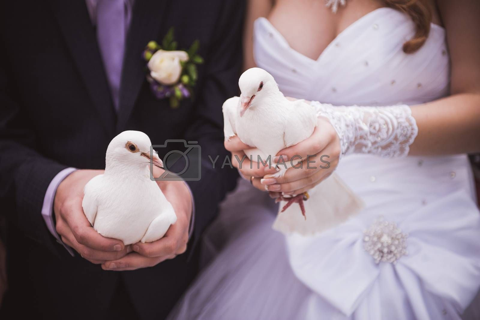 bride and groom holding two white pigeons