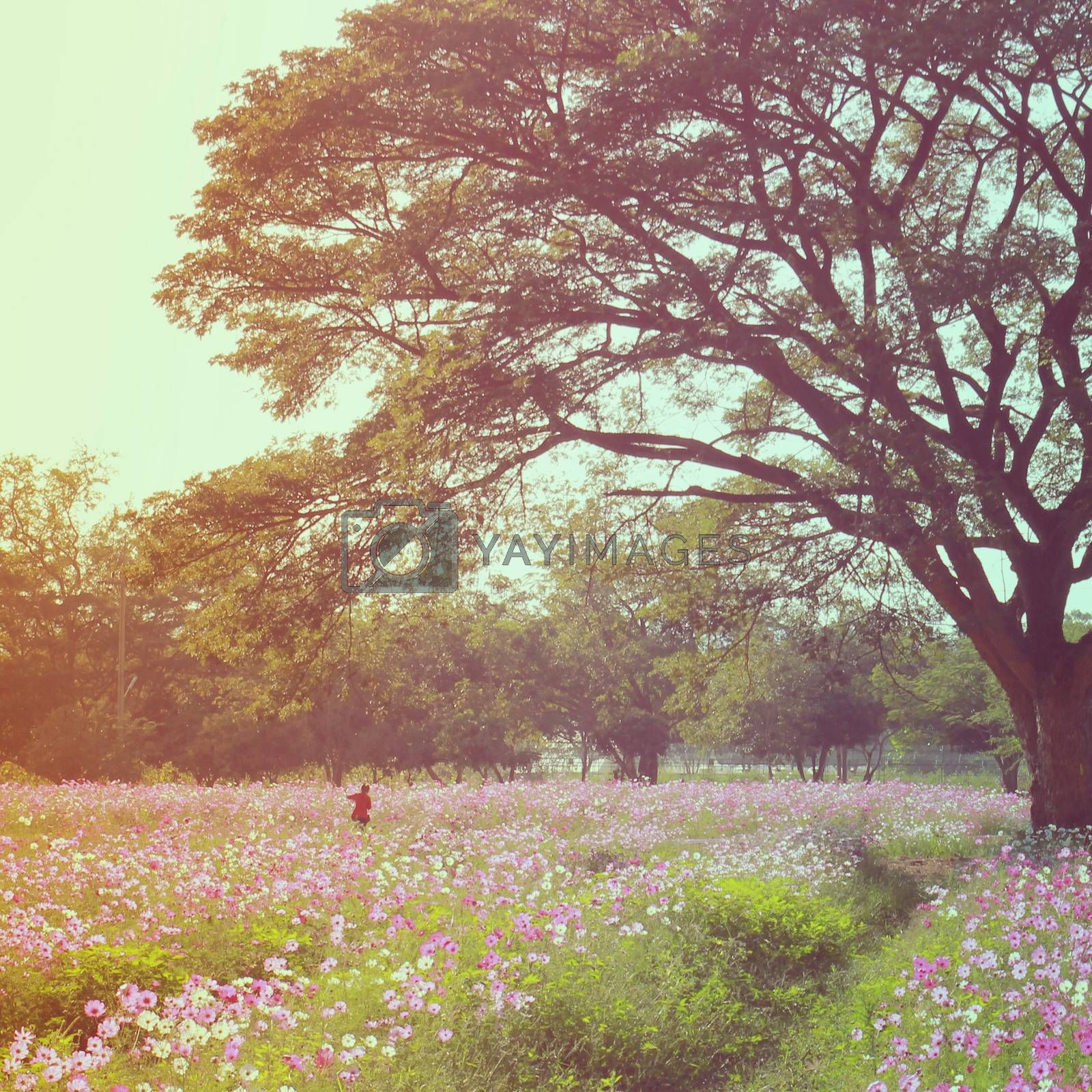 A woman walking in the flowered field with retro filter effect