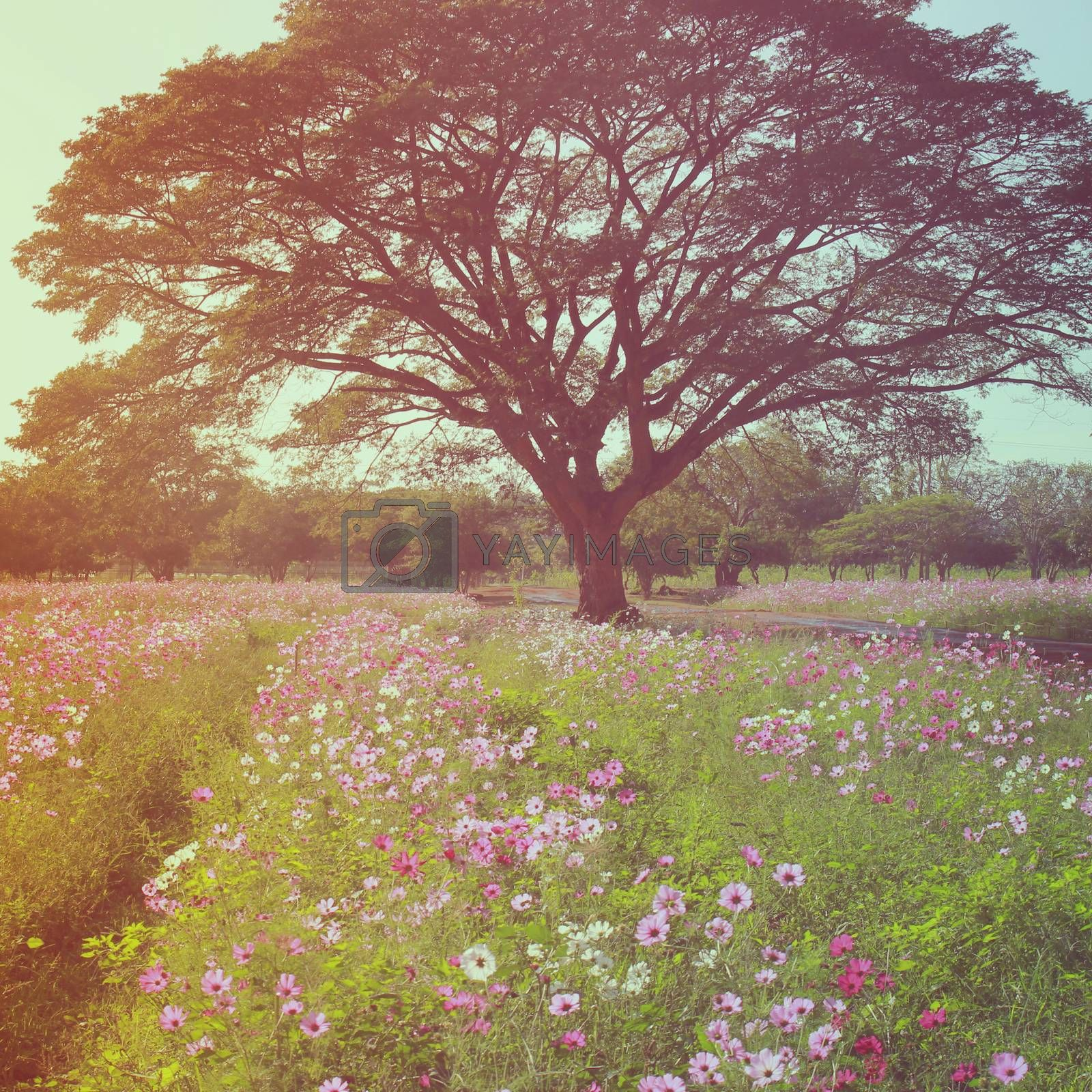 Beautiful tree in flowered field with retro filter effect