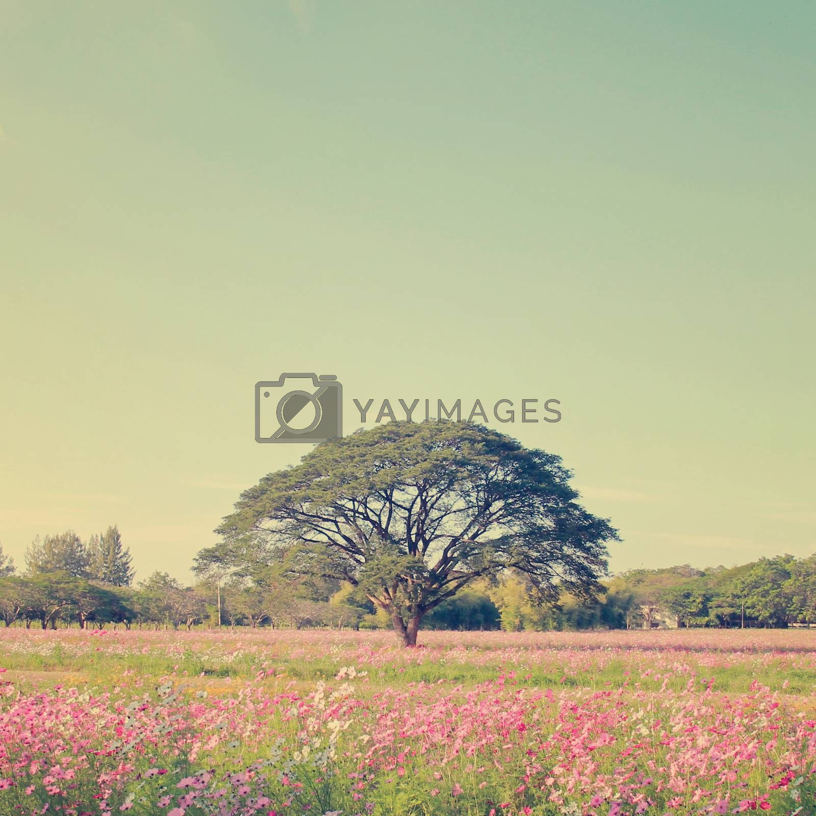 Beautiful tree in colorful field with retro filter effect
