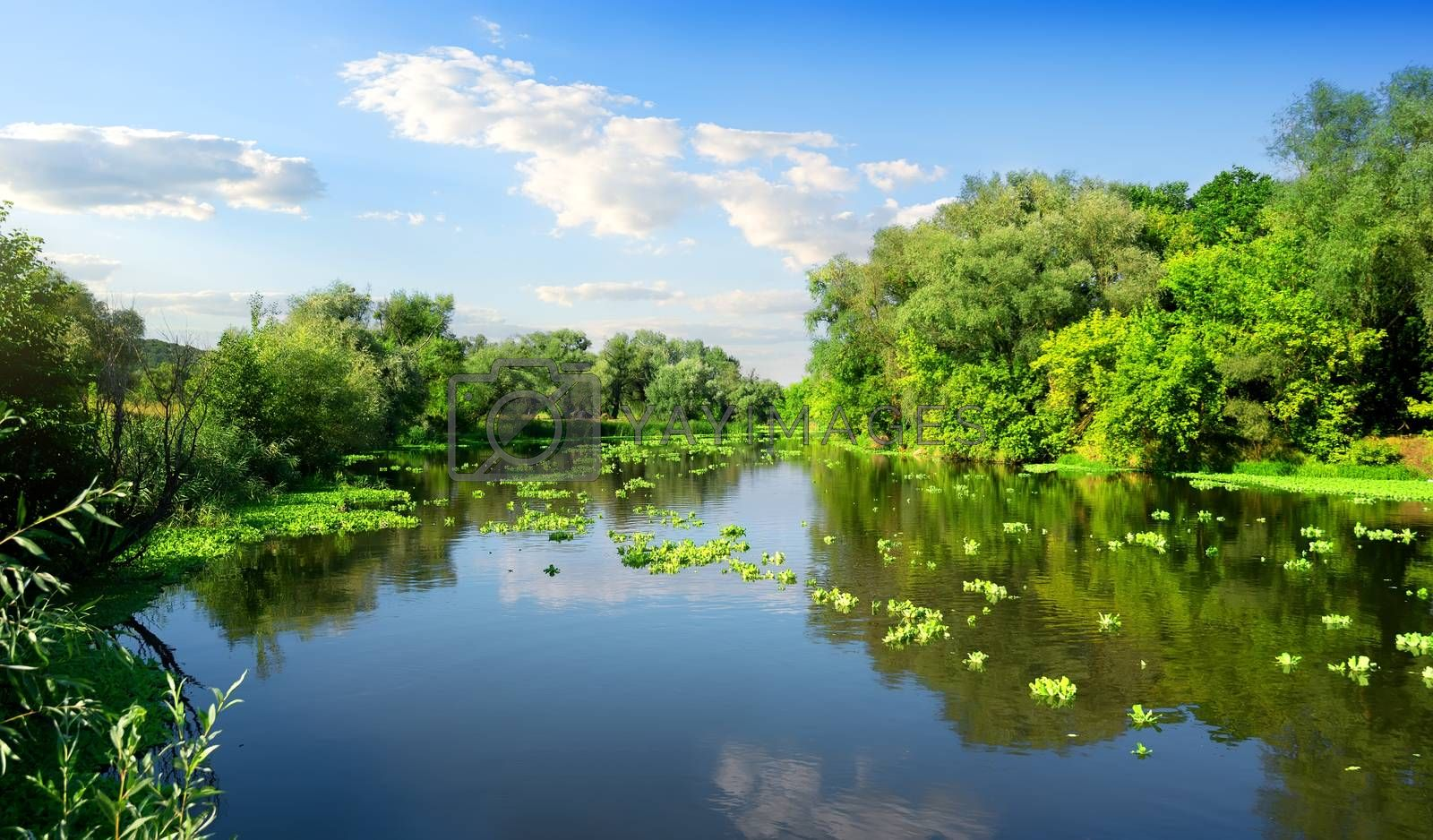 Calm river and green forest in sunny day