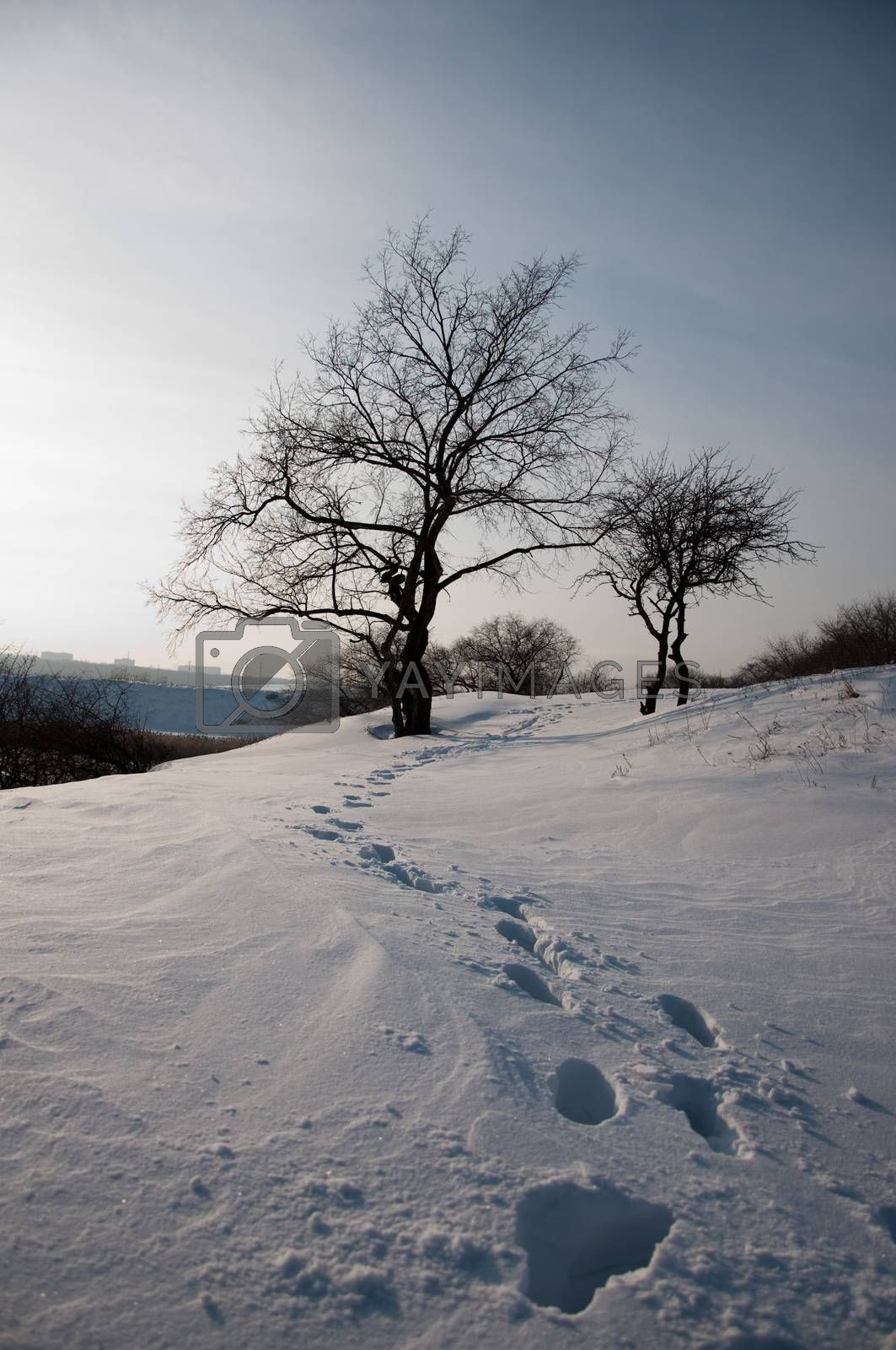 marks of person walking on snow field with tree as background winter