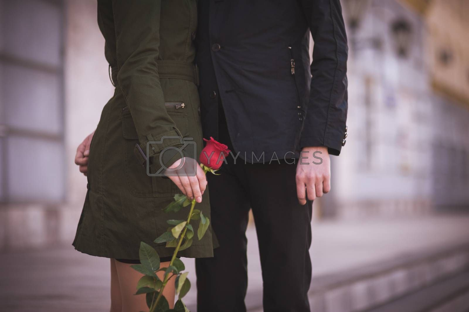 couple in love  holding hands togetherwith red rose  no face