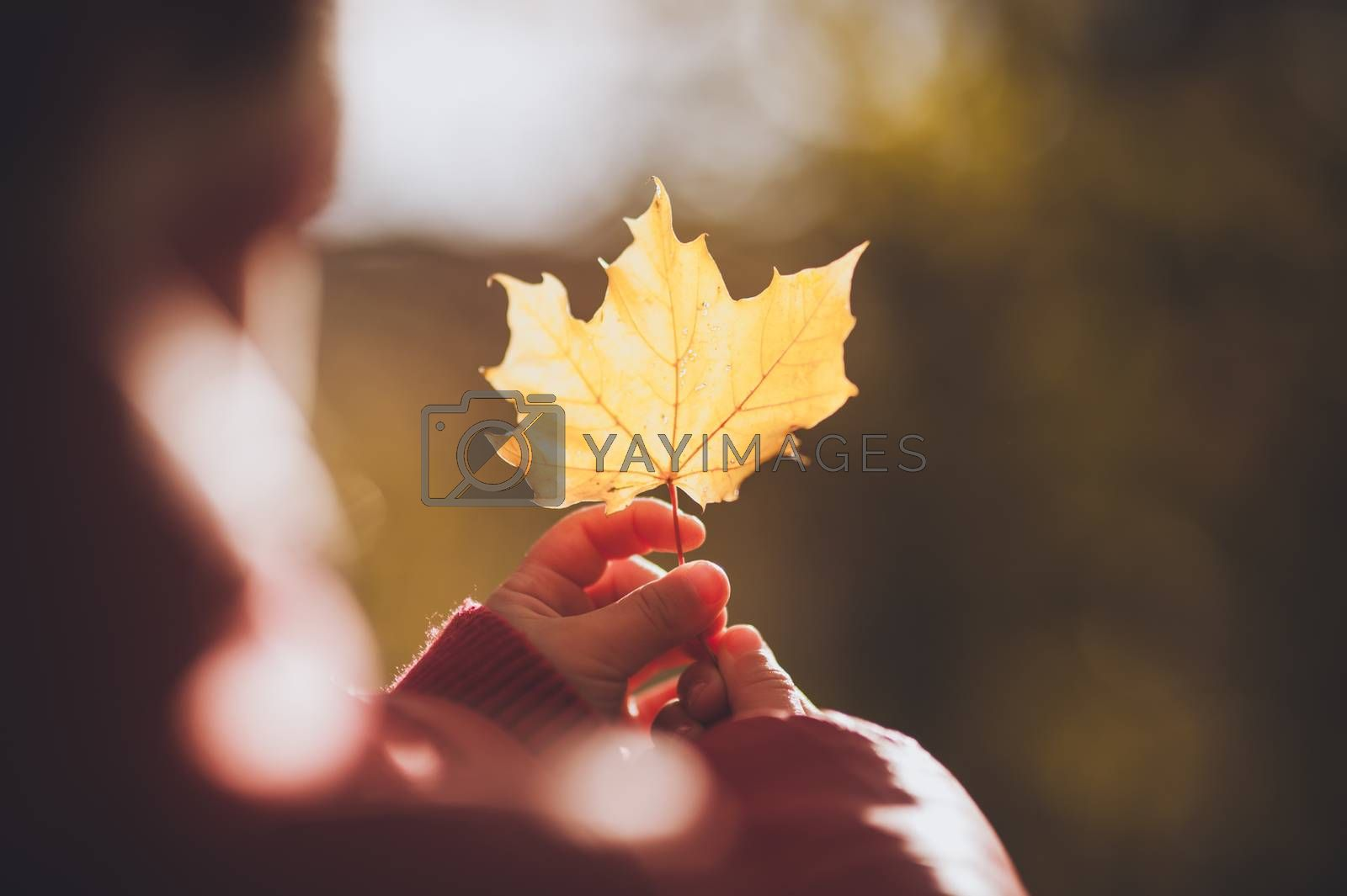 child holding orange leaf in autumn no face