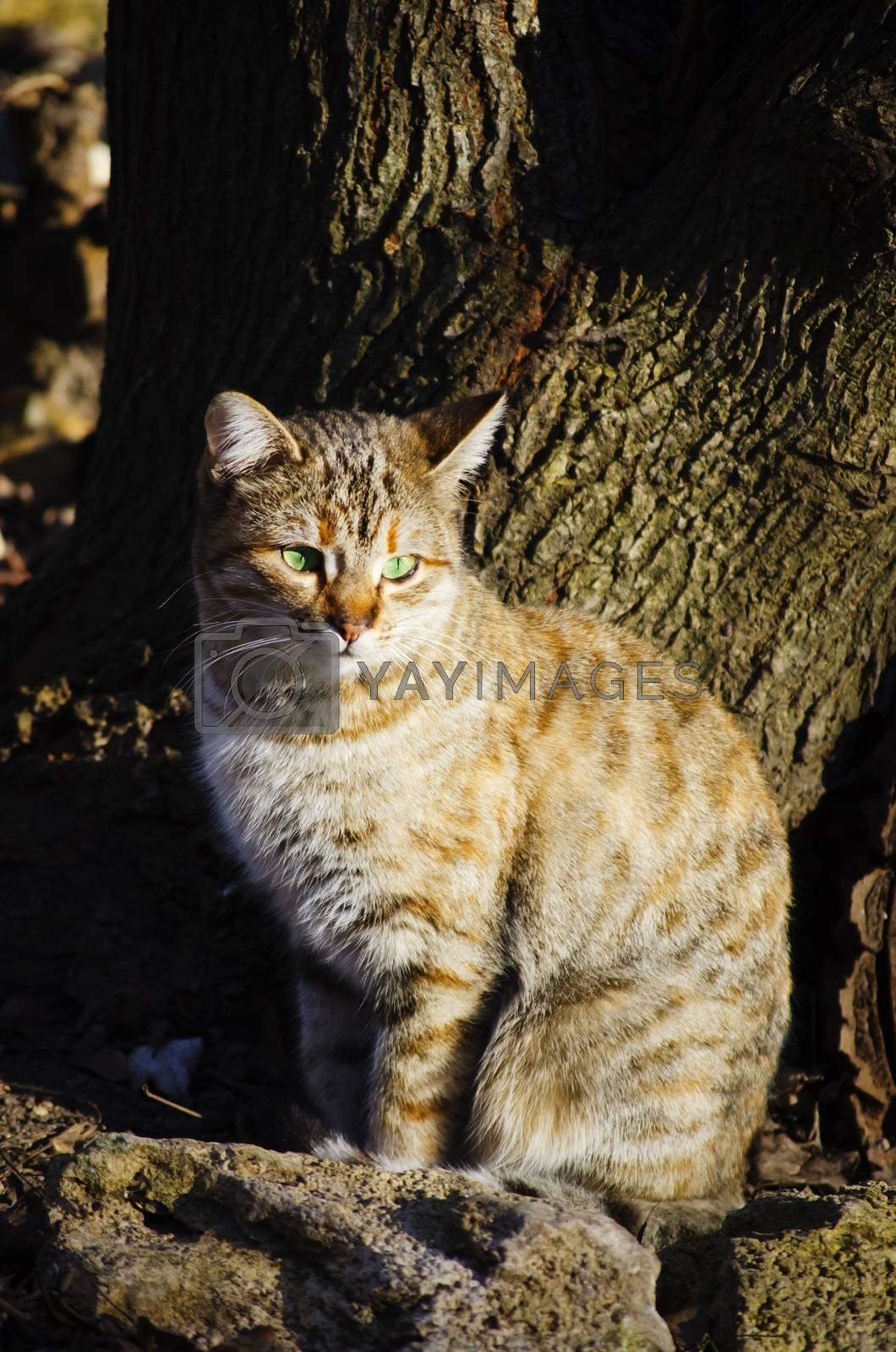 Photo of Green-eye Single Beige Cat
