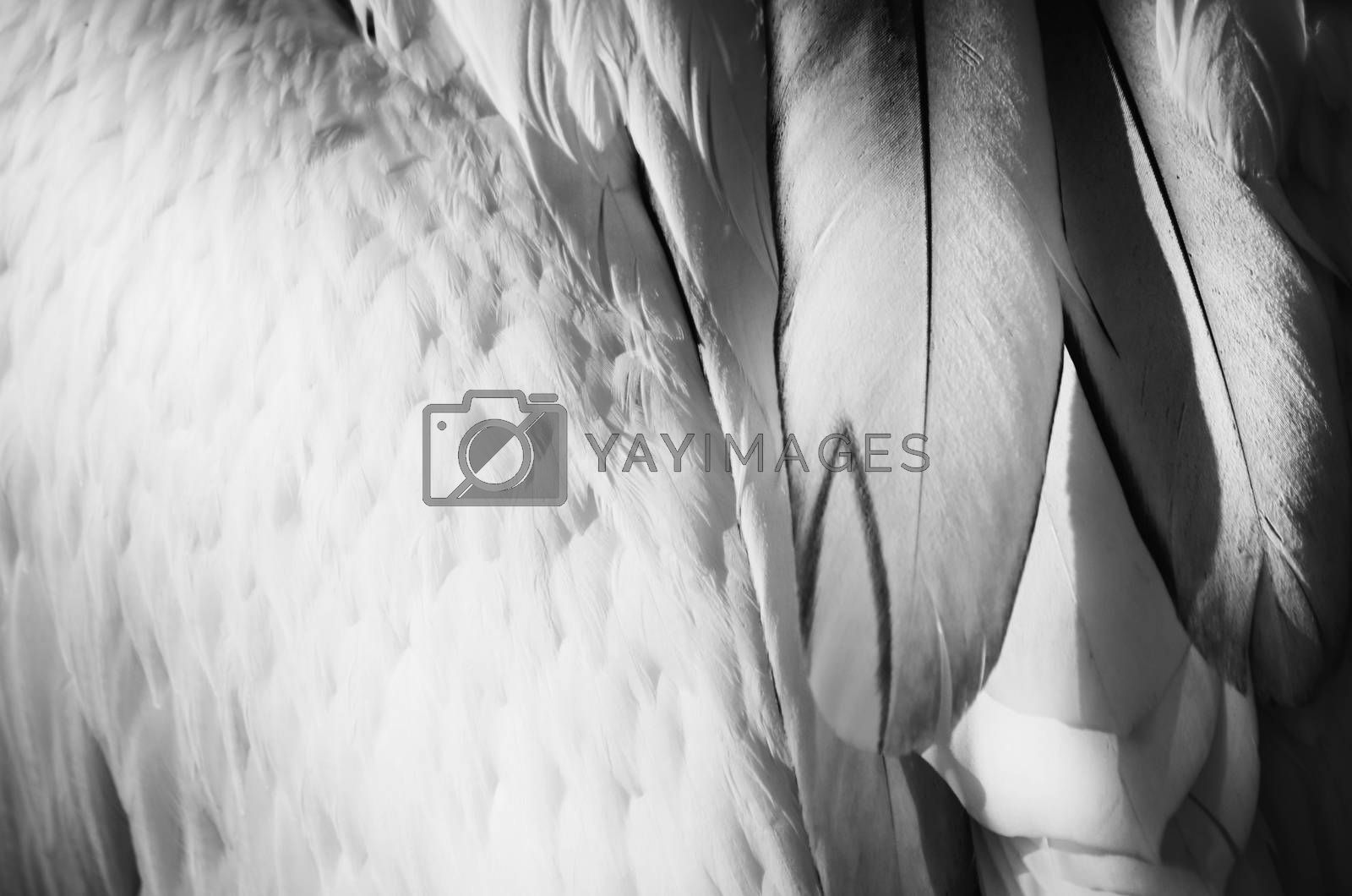Photo of the Bird Feather Background