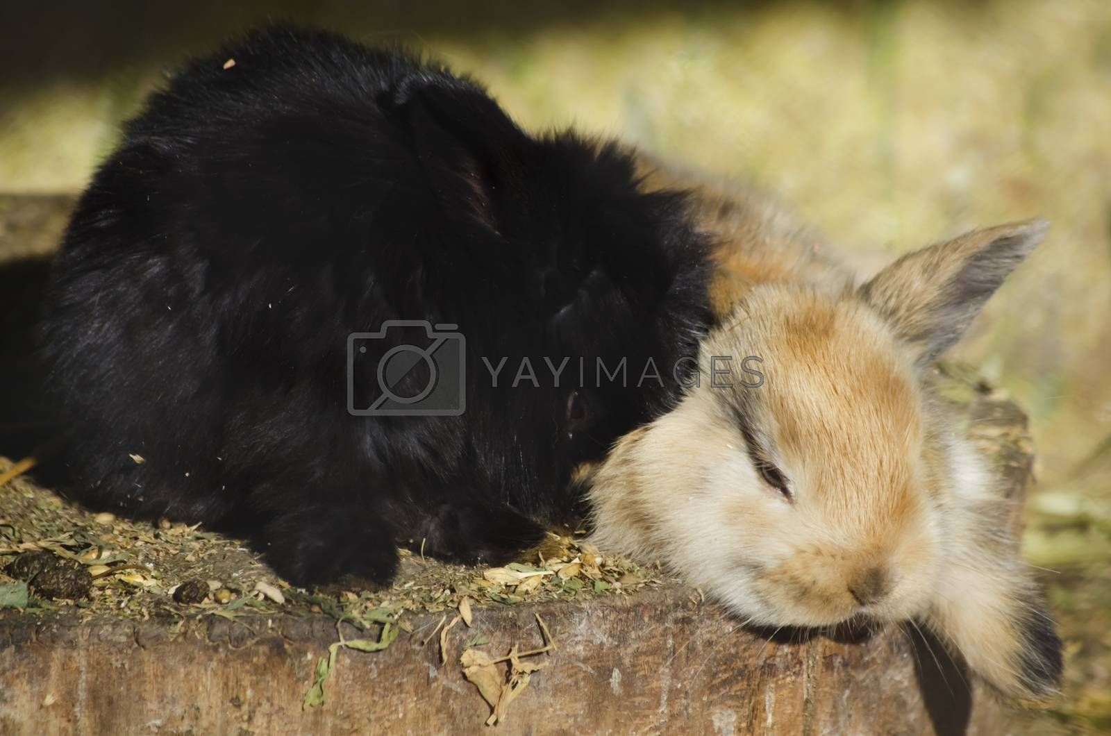 Photo of the Two Little Rabbits