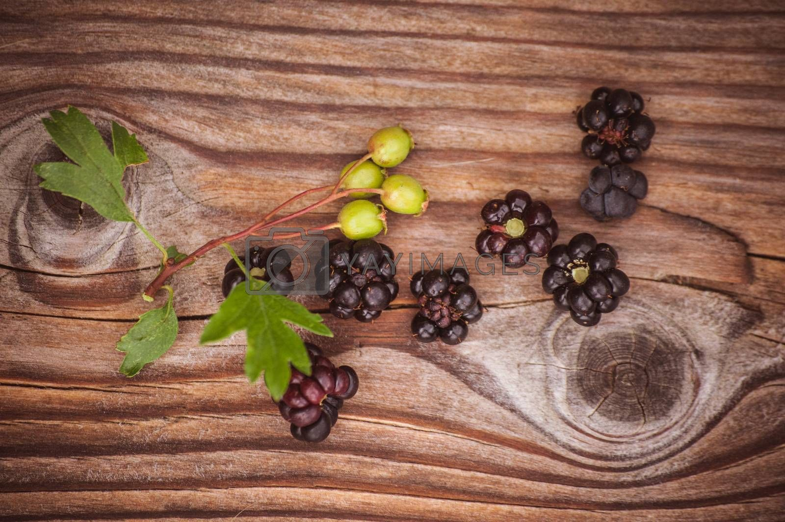 wild blackberry berries on wooden background with leafs