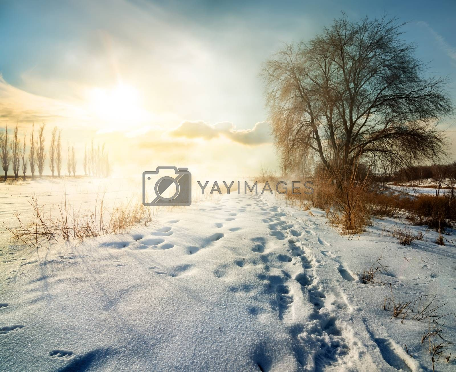 Winter in countryside by Givaga