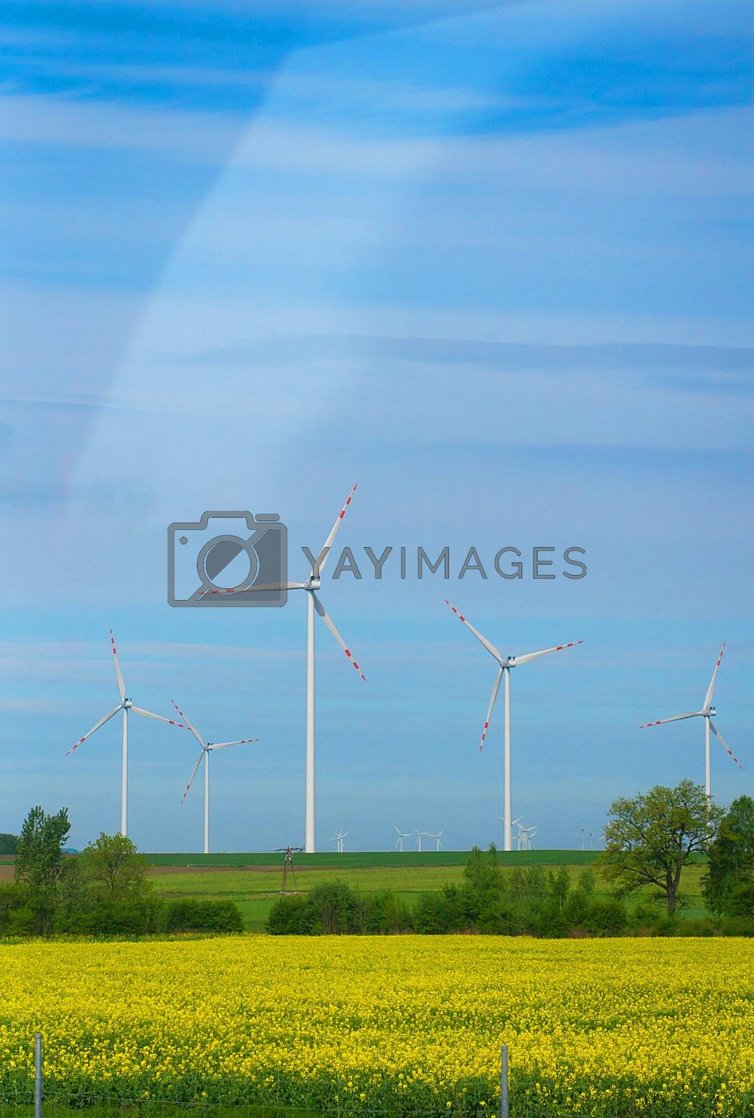 Royalty free image of Eco power, wind turbines by sfinks