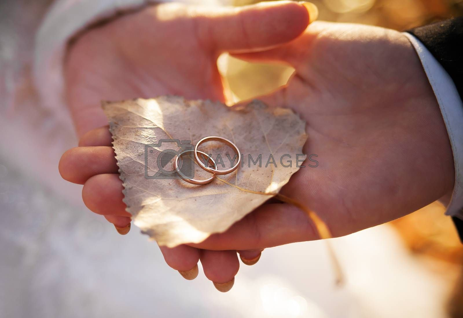 Royalty free image of Bride and groom are holding leaf with rings by sfinks