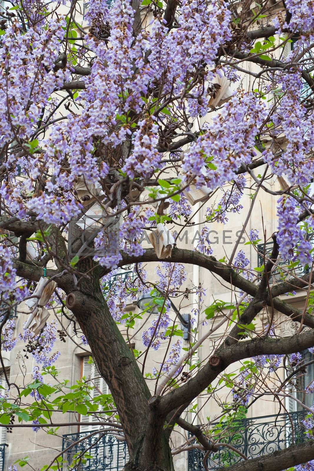 Royalty free image of Book hang on tree with blue flowers France, Paris by sfinks