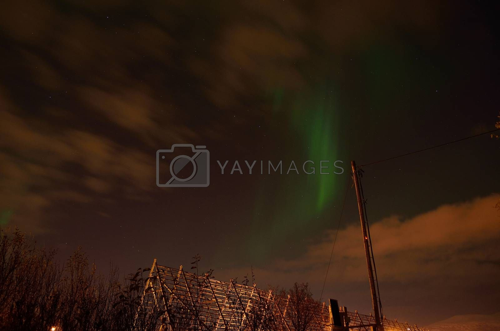 beautiful aurora borealis over a stockfish structure in the arctic circle on a late autumn night