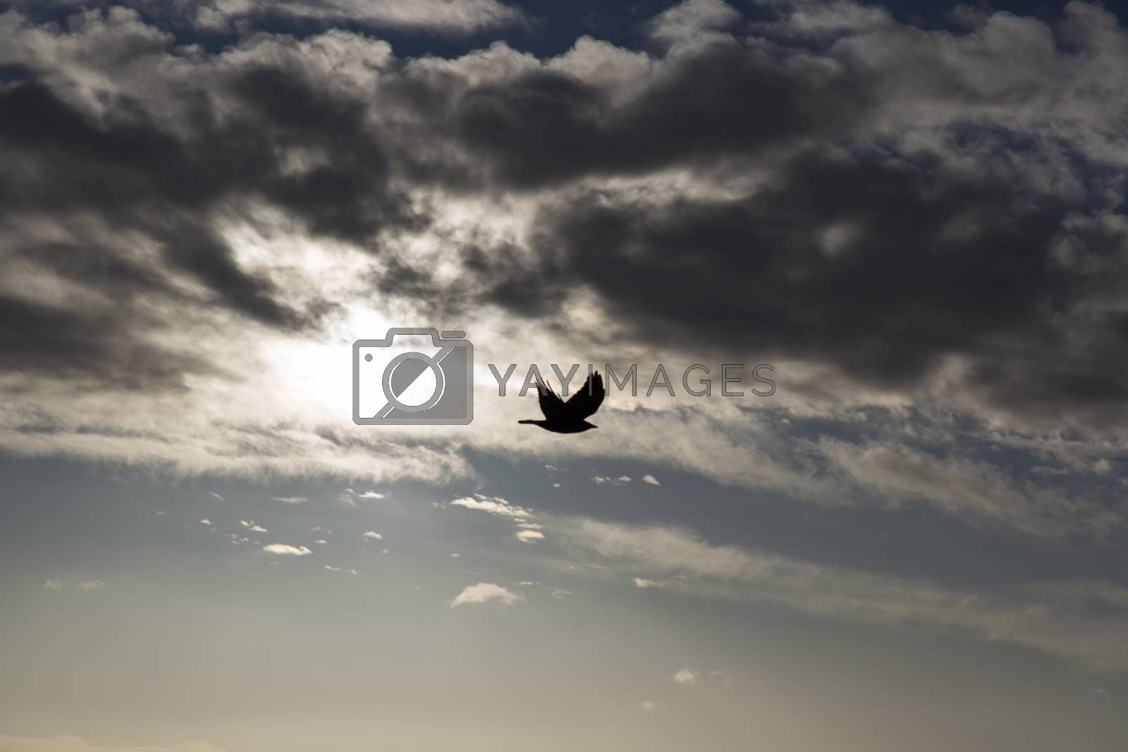 Bird flying Away from the Sun