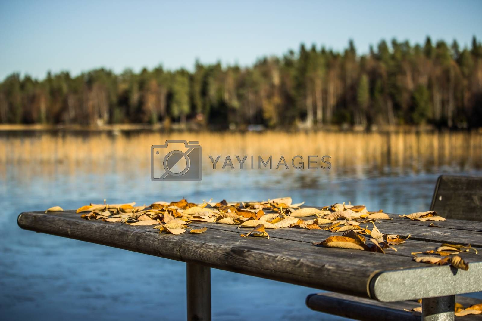 Table with Fall Leaves