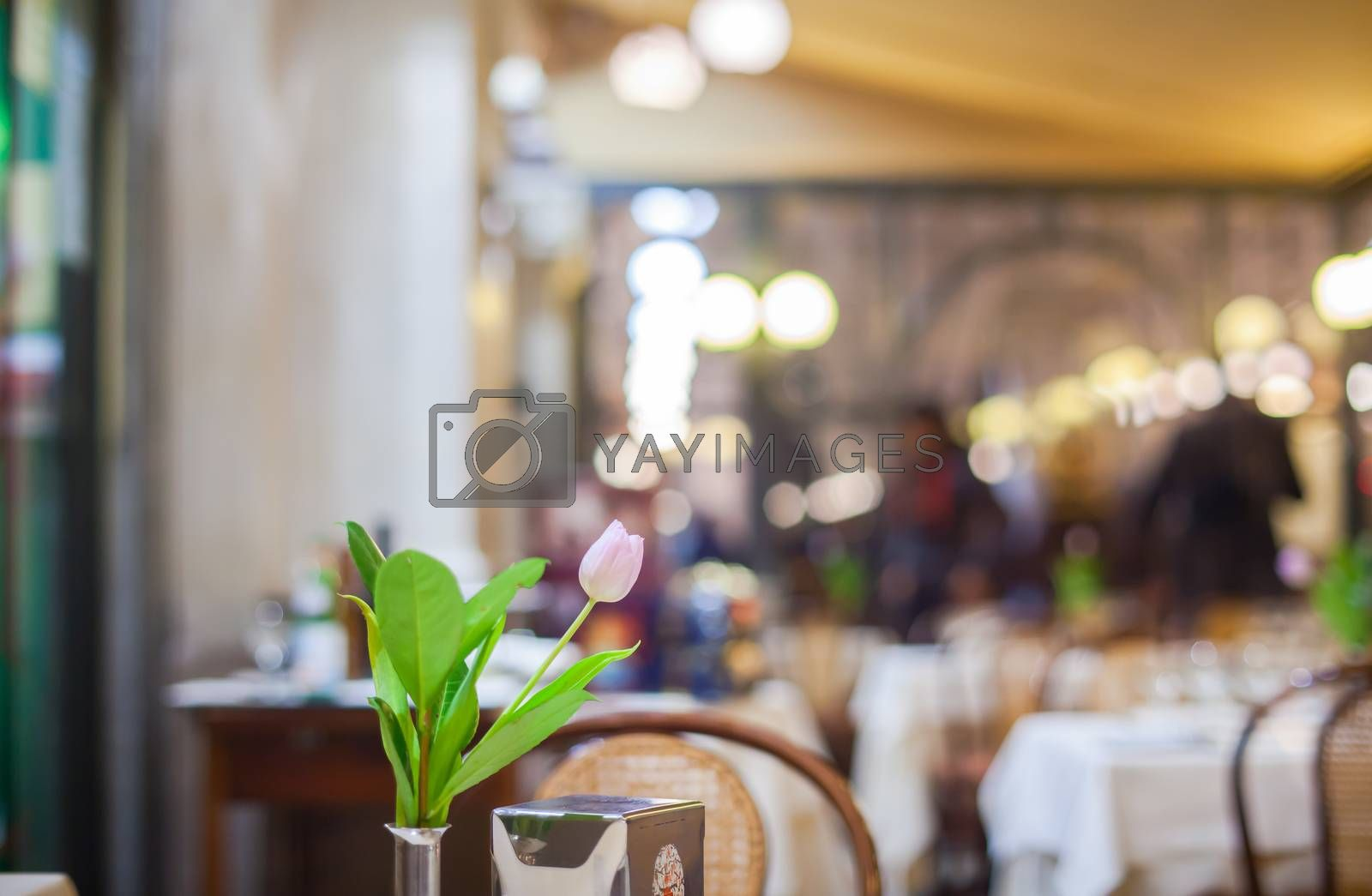 View of tulip flower on the restaurant table