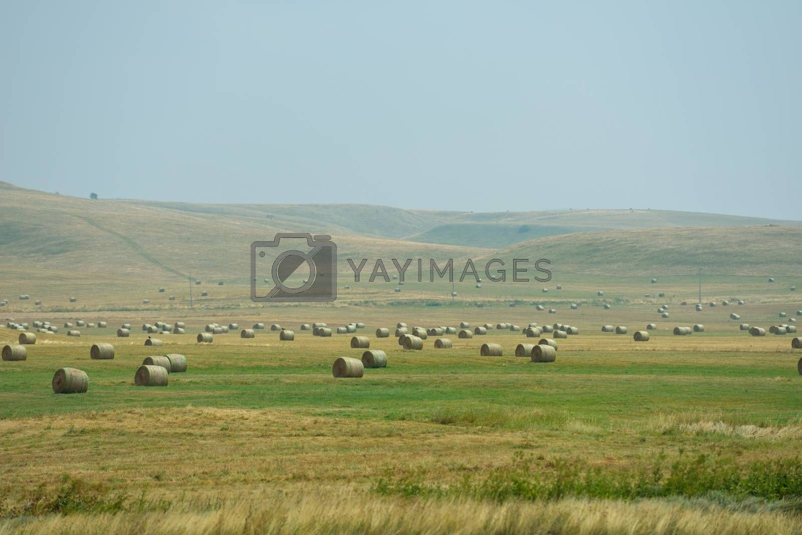 landscape with a traditional hay field full of wild flowers and grasses surrounded by trees under a cloudy summer sky