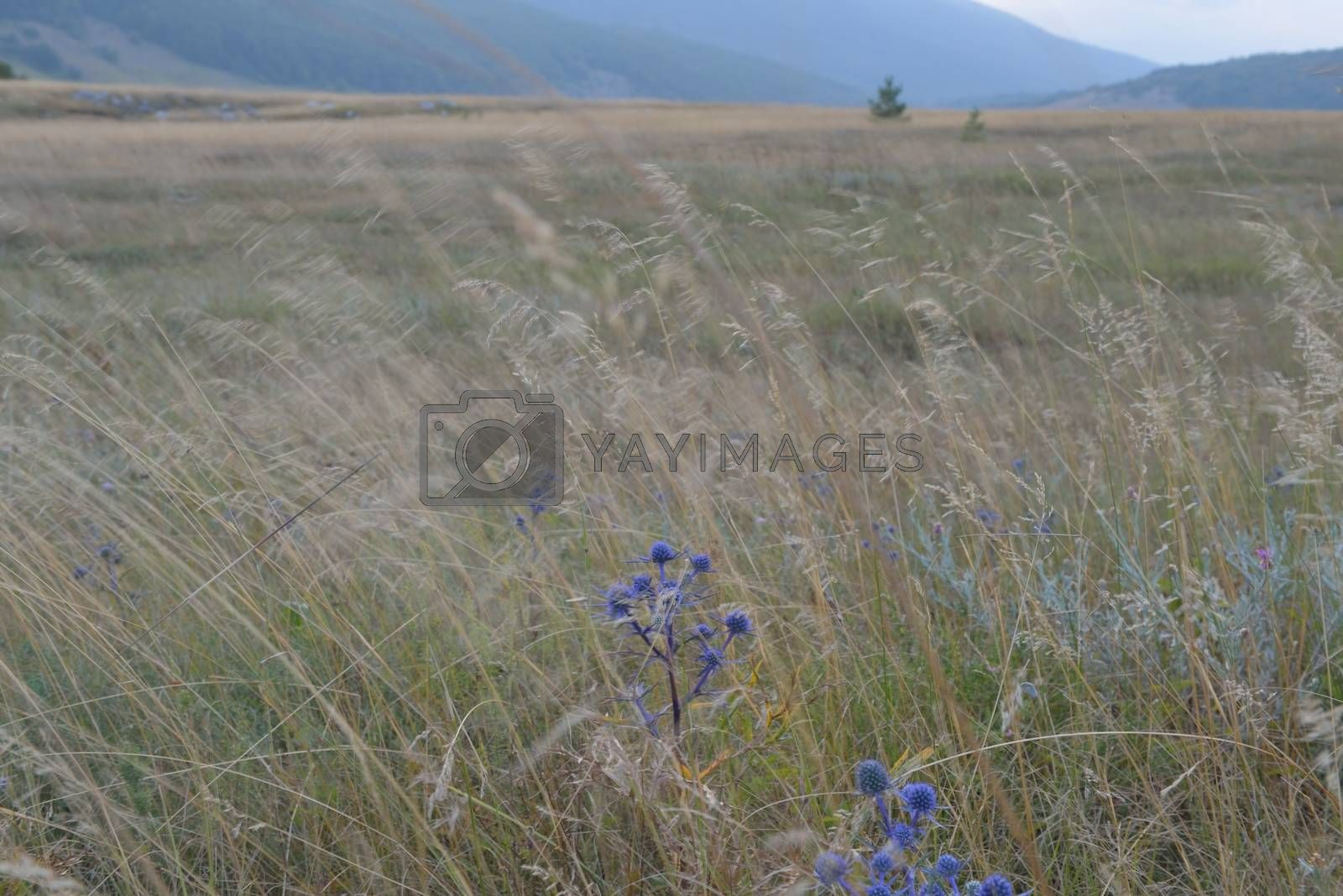 summer landscape by .shock