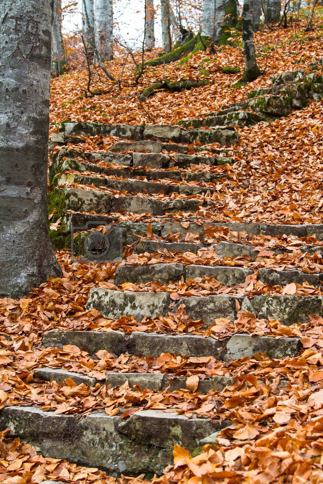 Steps in forest in autumn.