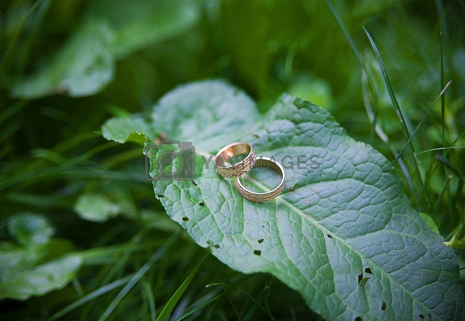 Royalty free image of Two Golden wedding rings lie on leaves plant. by sfinks