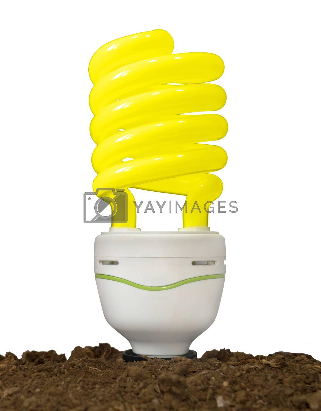 Bulb in soil