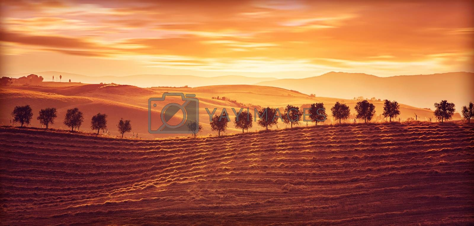 Beautiful countryside landscape, amazing orange sunset over golden ripe wheat hills, beauty of nature, agriculture and farming concept