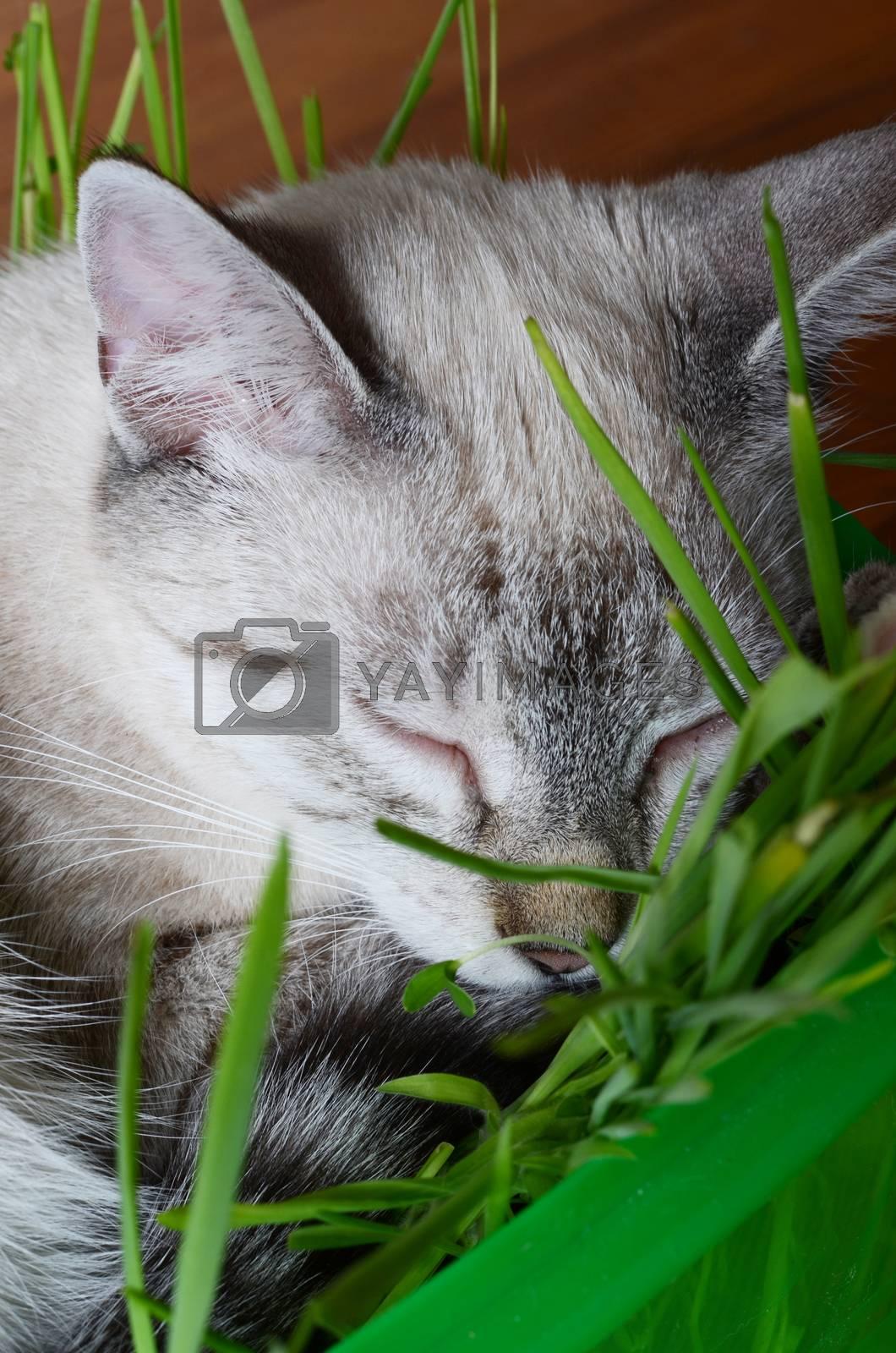 kitten sleeping in grass