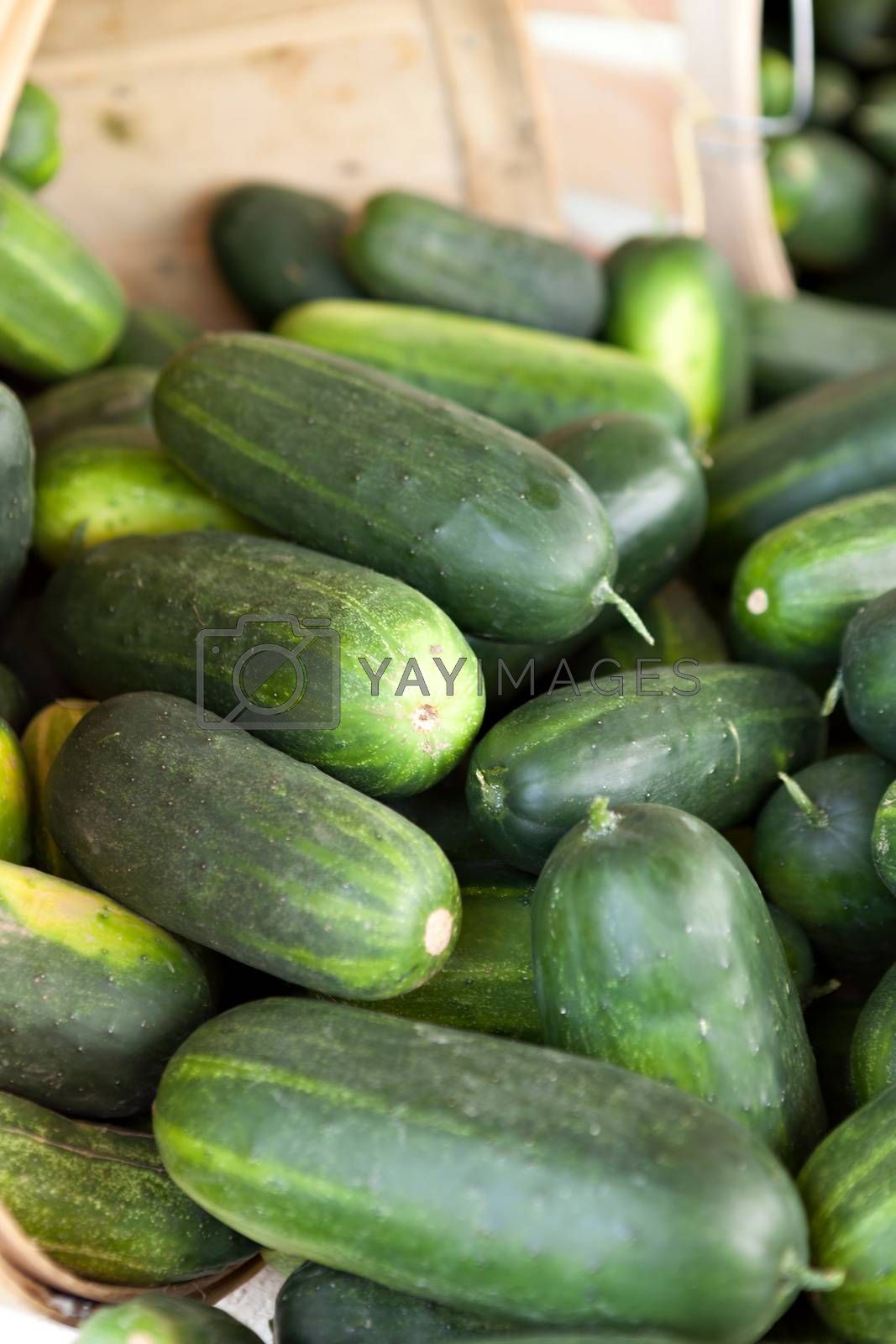 Fresh green cucumbers piled on a market stand. Shallow depth of field.