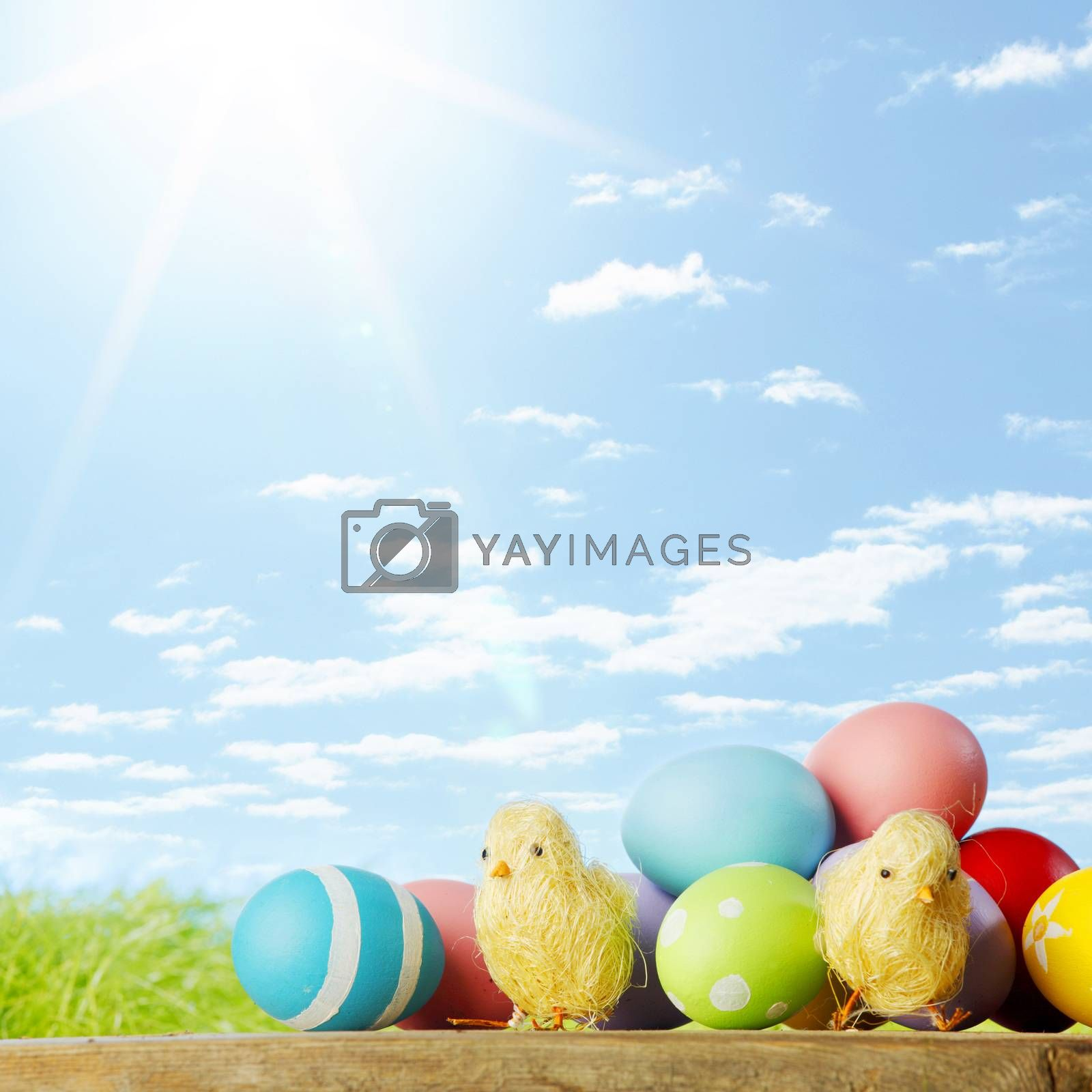 Easter composition with eggs and chicks on green meadow