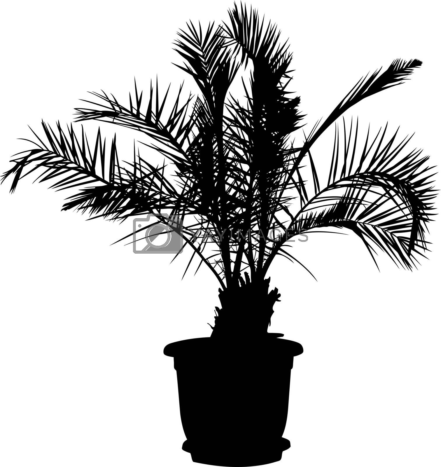 detailed illustration of a palm tree