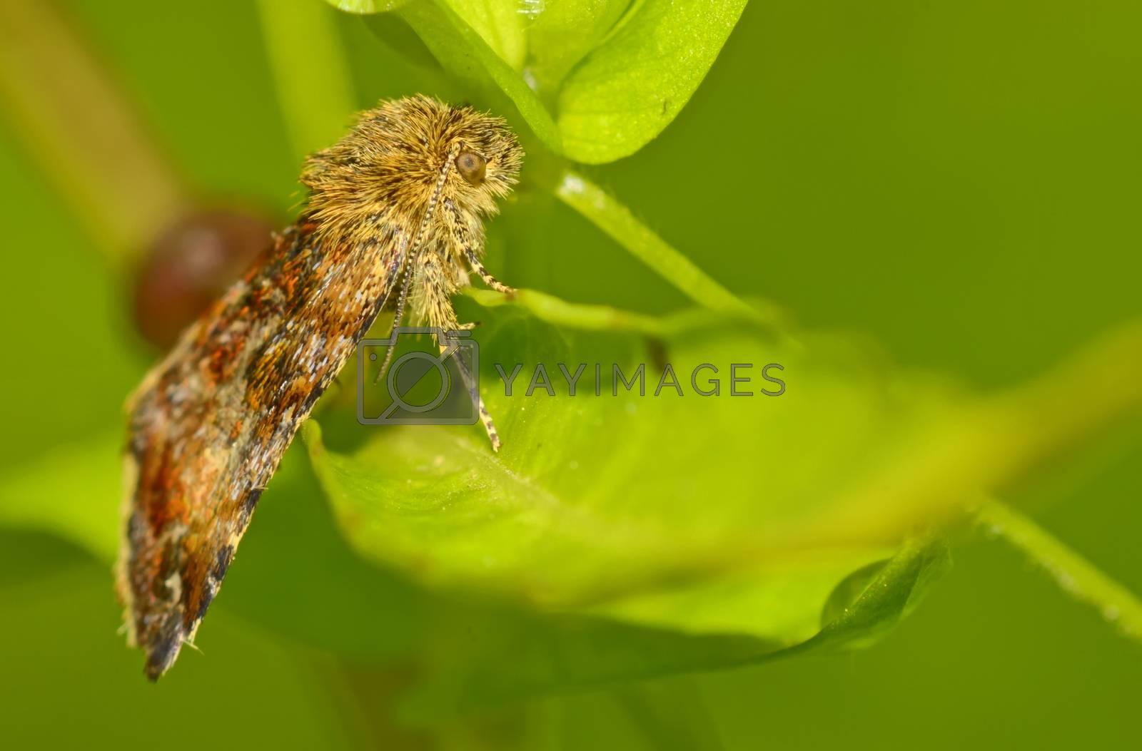 closeup a moth in forest