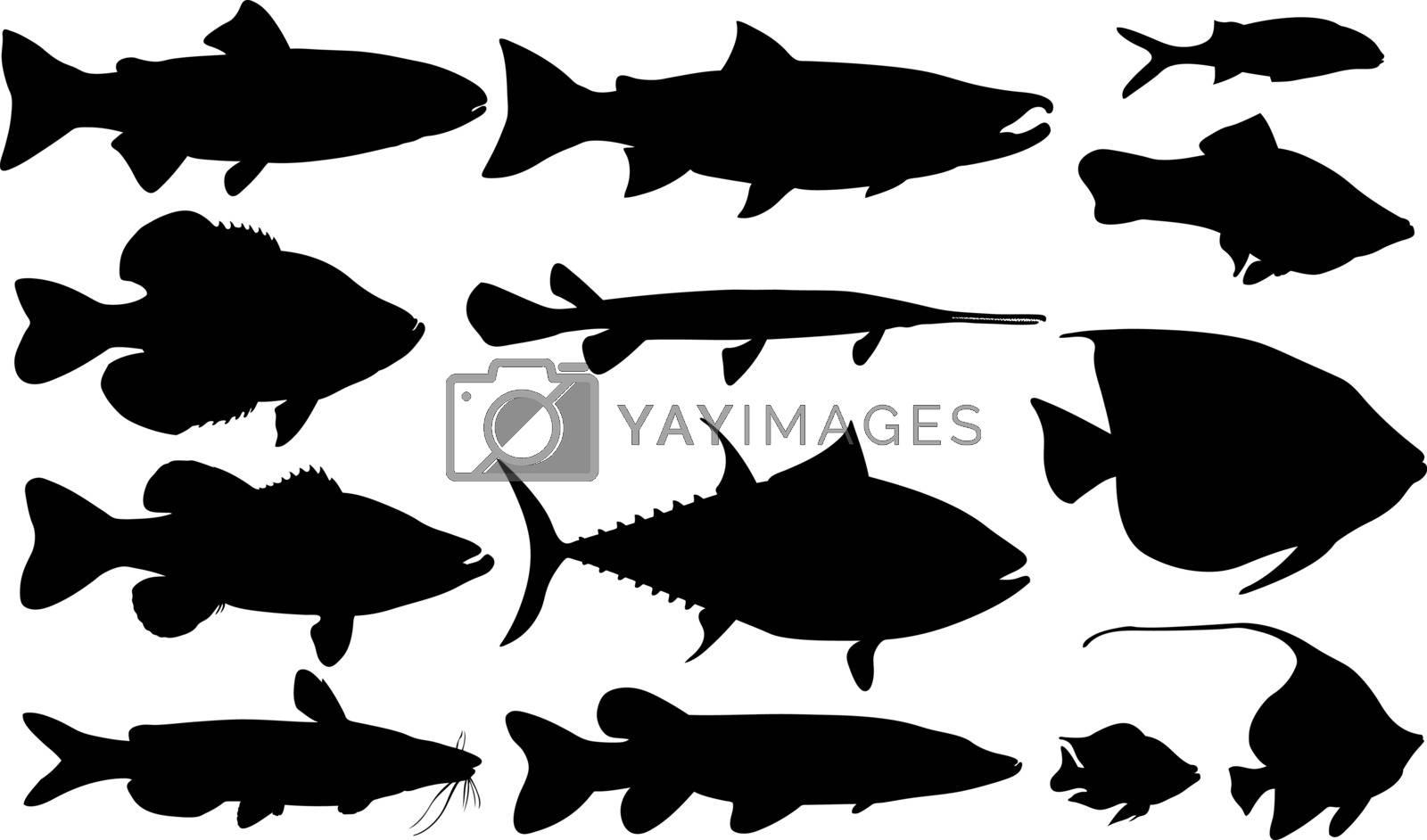 set of different fish