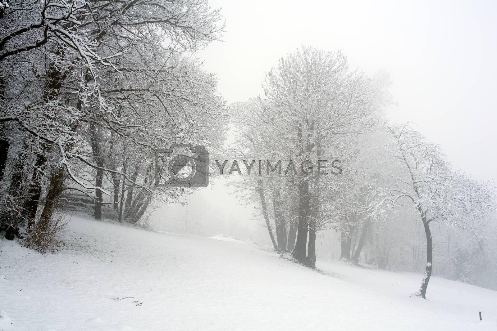 View of forest covered by snow