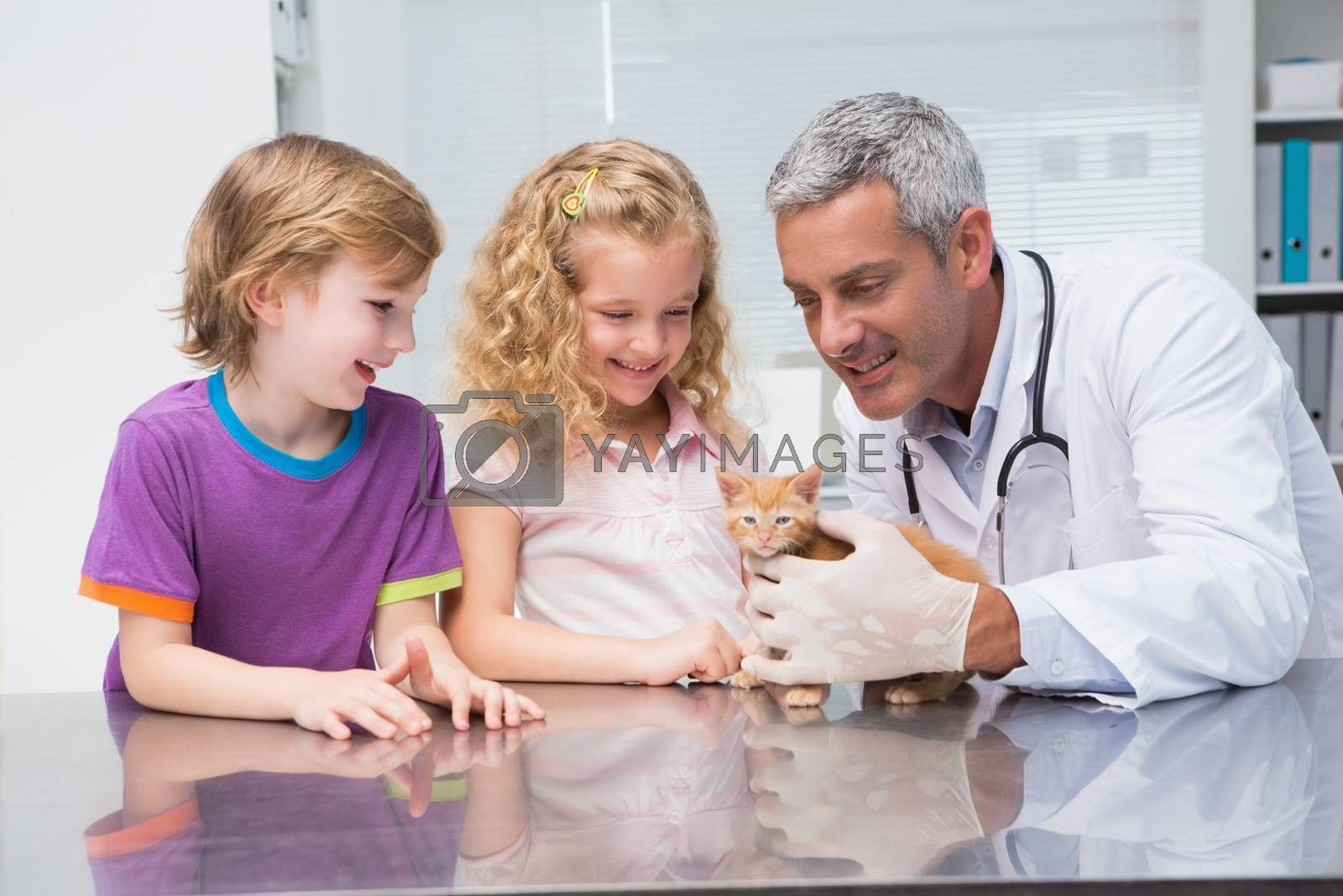 Veterinarian examining a cute cat with its owners in medical office