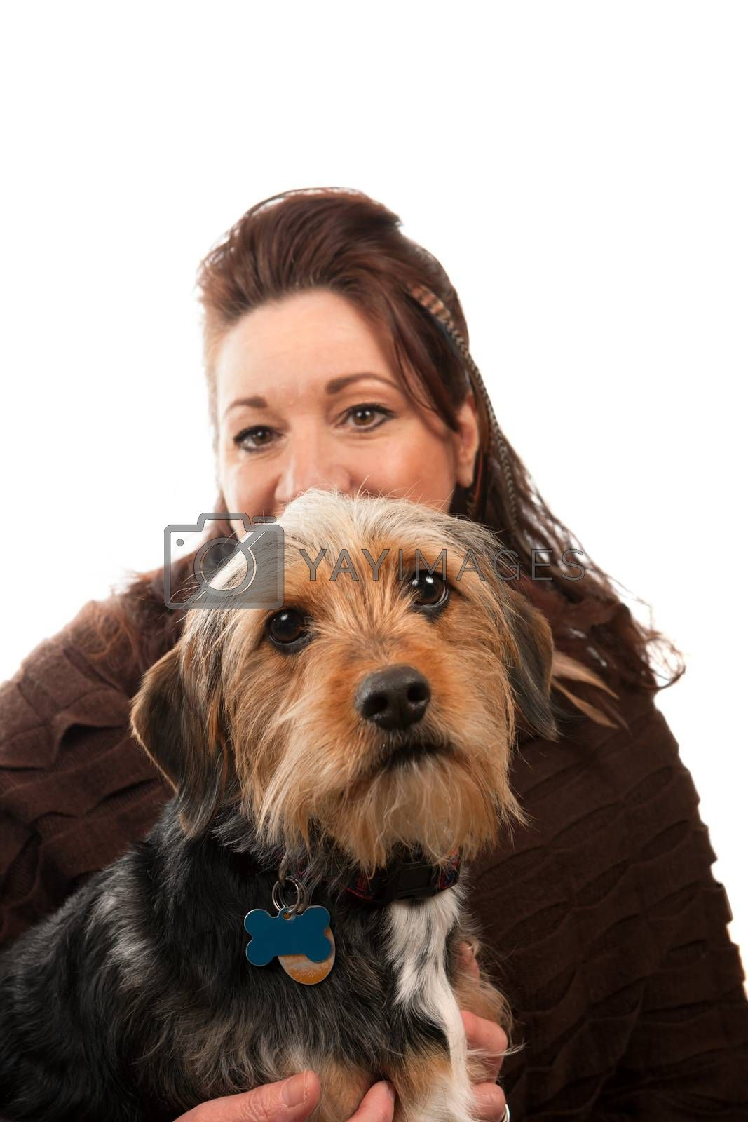 A middle aged woman isolated over white holding a cute mixed breed Borkie dog.