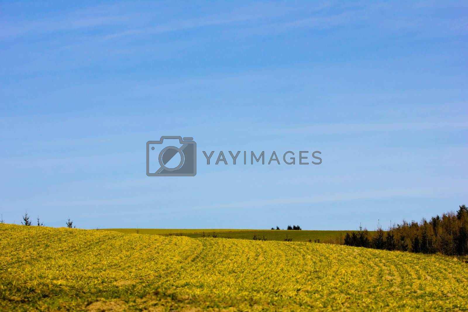 Agricultural land in spring by gwolters