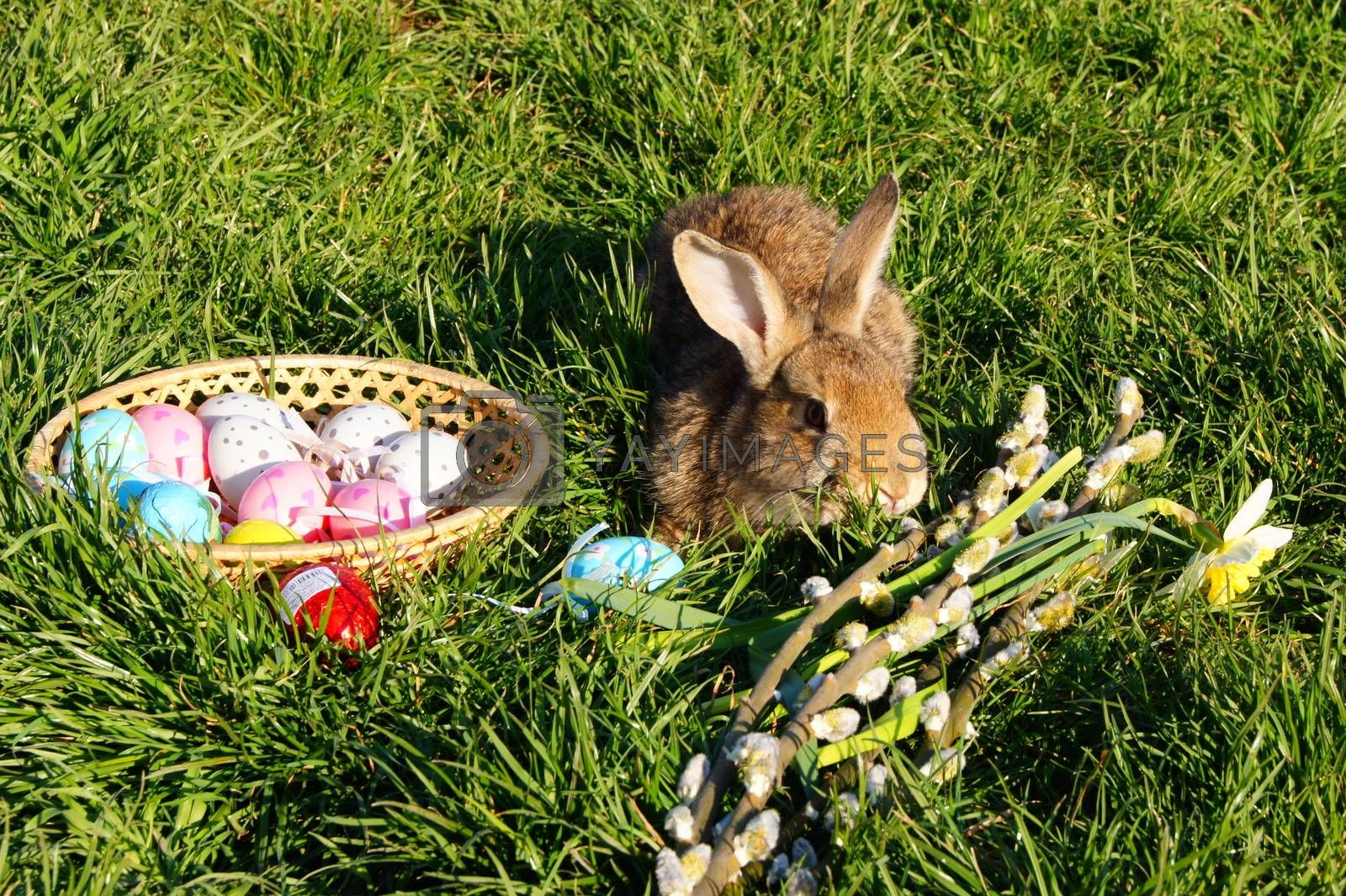 Feast of the Passover, Easter eggs and rabbits.