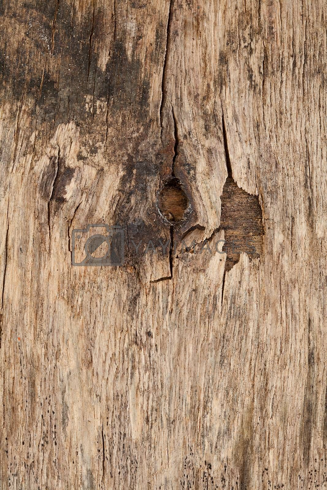 Close up of a wooden piece of hardwood
