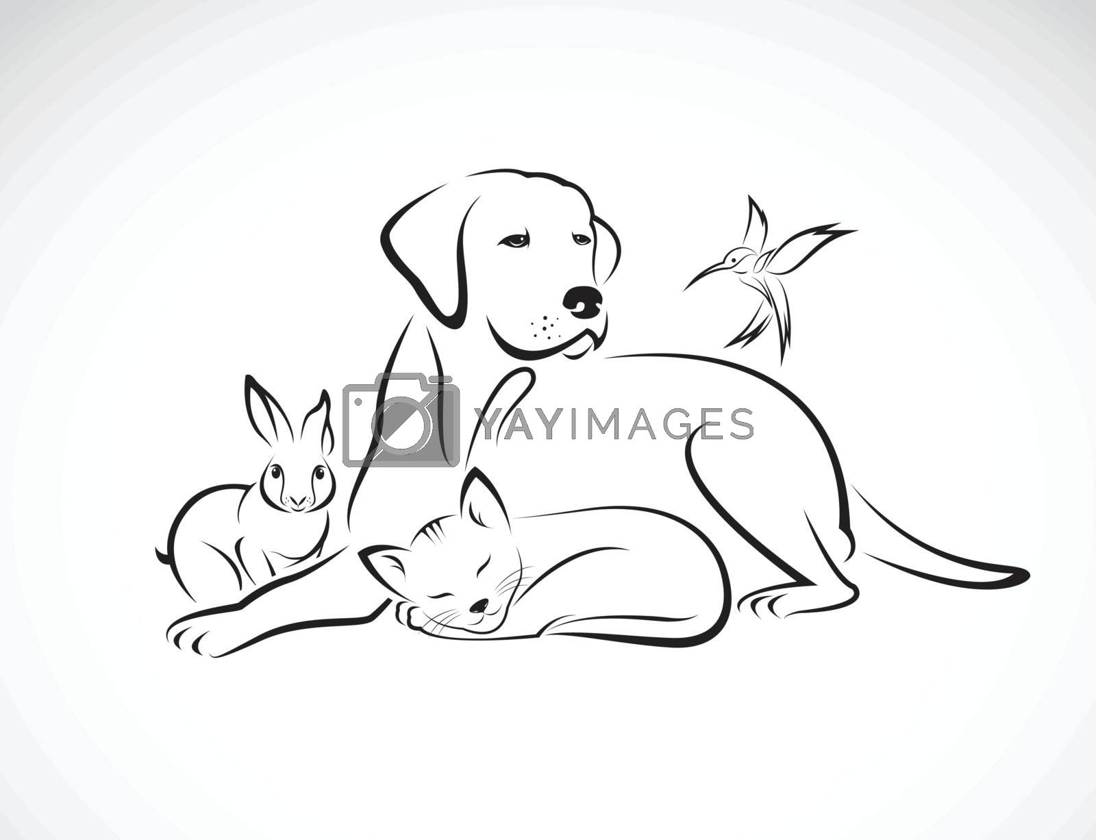 Vector Group Of Pets Dog Cat Bird Rabbit Isolated On White Royalty Free Stock Image Yayimages Royalty Free Stock Photos And Vectors