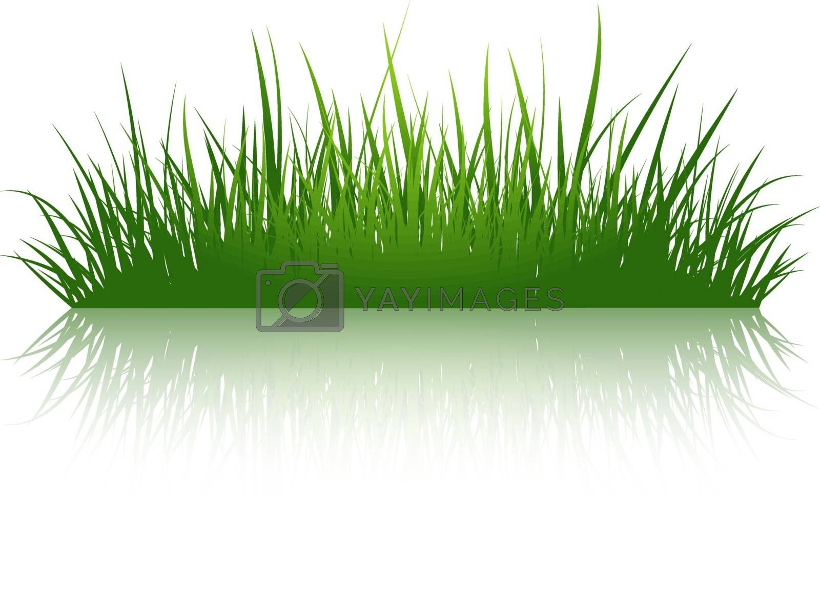 Green Grass Illustration Over White Background