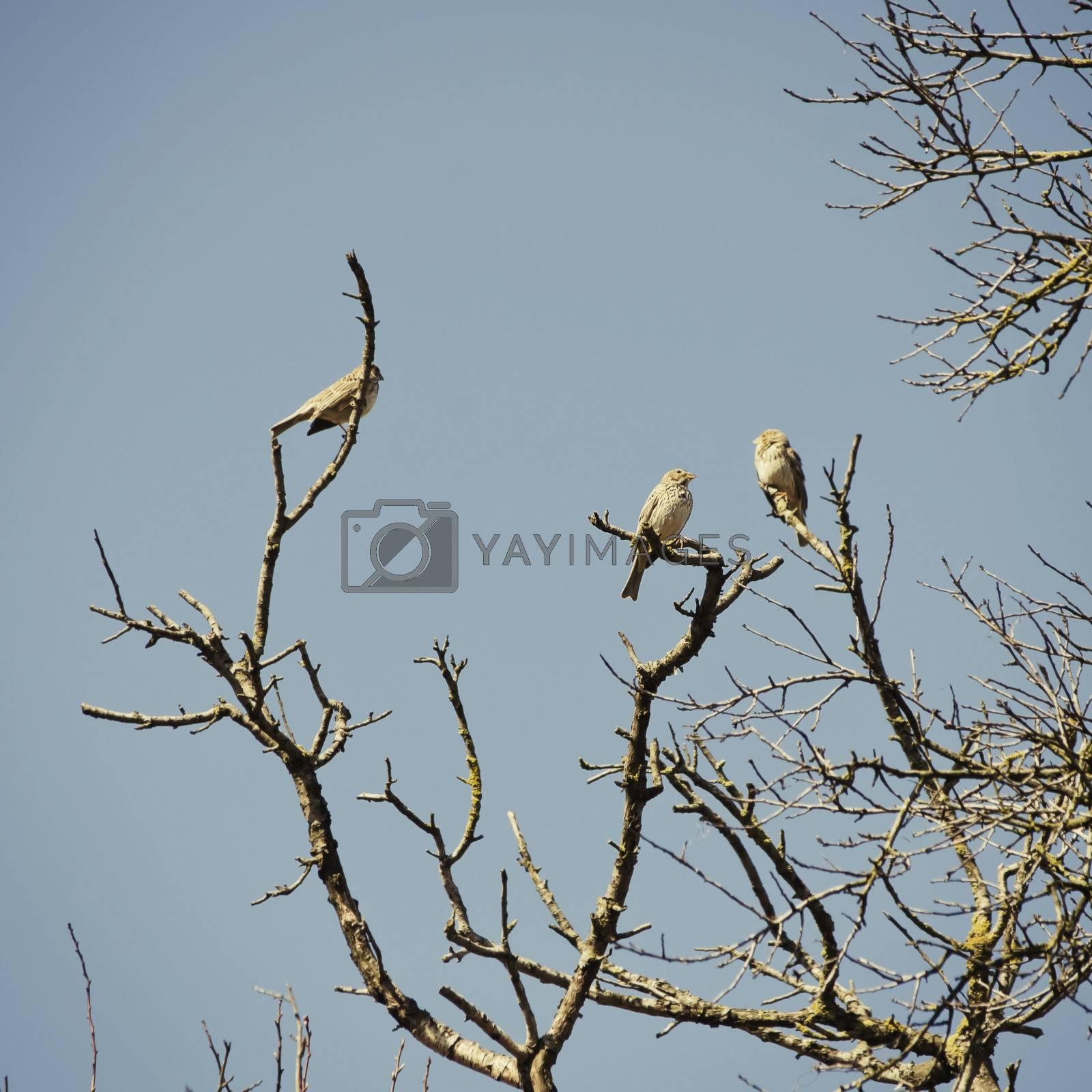 Birds at Tree by razvodovska