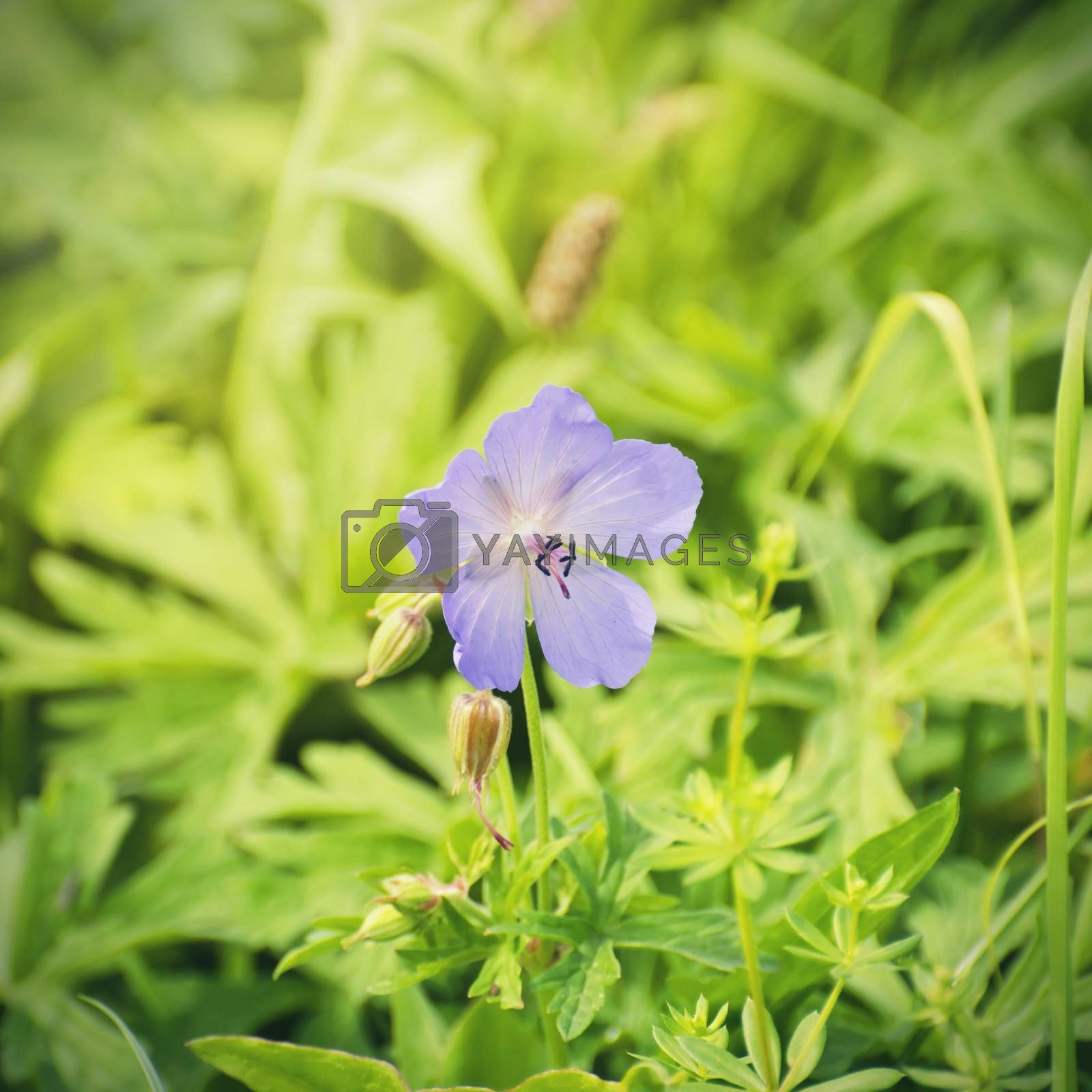 Flower Over Natural Background in Summertime